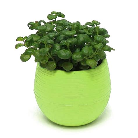 pots for plants colourful cute round plastic plant flower pot home office
