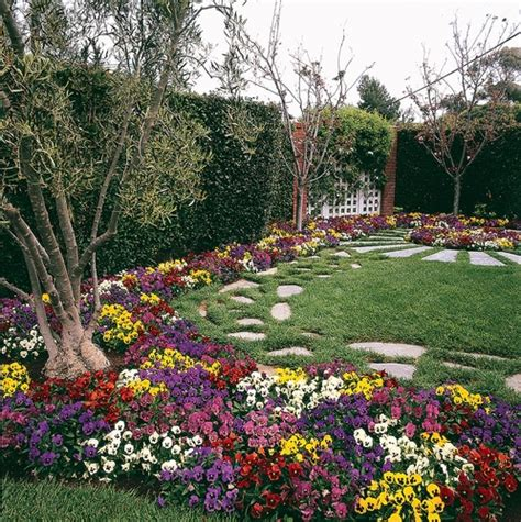 Pansy Garden Ideas Pansy Garden Ideas Container Gardening Idea Dusty Miller Pansies Pansies In The Landscape