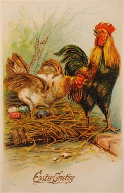 are chickens color blind eggs roosters and easter greeting on