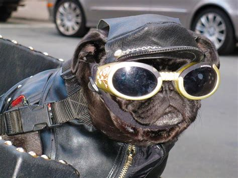 Dogs Motto moto dogs 4ever2wheels the best of the web on two wheels