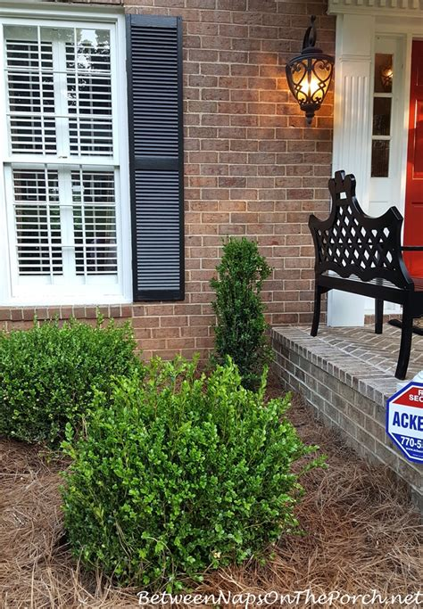 landscaping  boxwood green beauty baby gem green