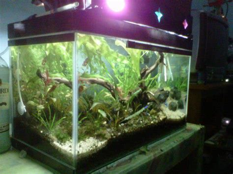 Pupuk Dasar Alternatif Aquascape aquascape