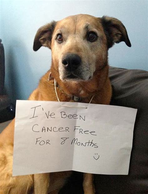free puppies in delaware 10 cachorros que venceram o c 226 ncer portal do