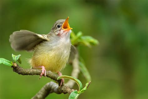 why do birds sing the same song over and over