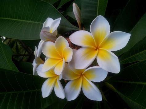 fiori belli fiori pi 249 belli dell asia naturalis