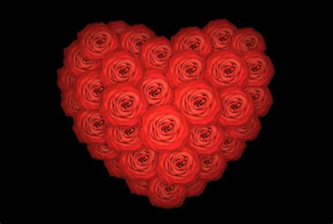 pictures of hearts and roses 25 beautiful hearts and roses pictures colorlava