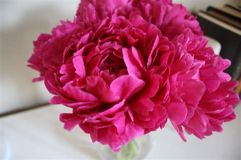 the pink peonies dwell and tell pink peonies