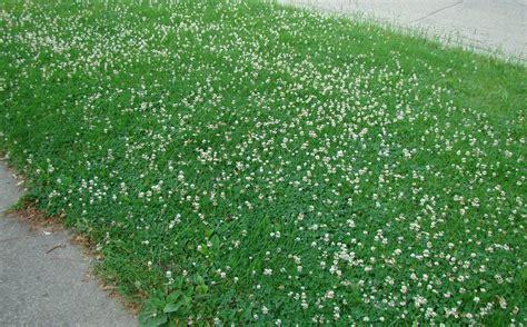 design great small yard landscaping ideas 60 birthday