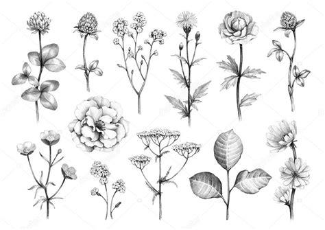 disegni a matita fiori disegni a matita di fiori foto stock 169 sashsmir 121990362