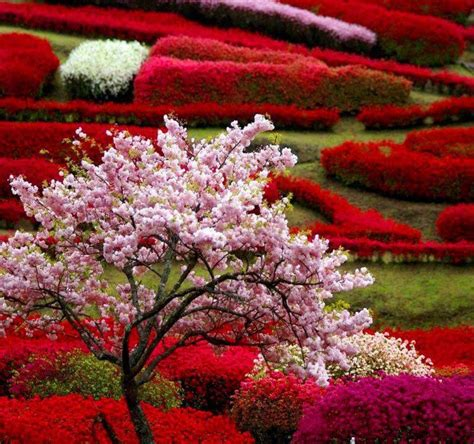 Flower Garden Japan Gorgeous Japanese Garden Flowers Gardens
