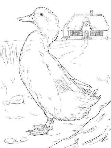 realistic duck coloring page realistic mallard coloring page coloring coloring pages