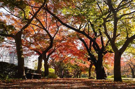 koishikawa botanical garden autumn color report 2014 tokyo report