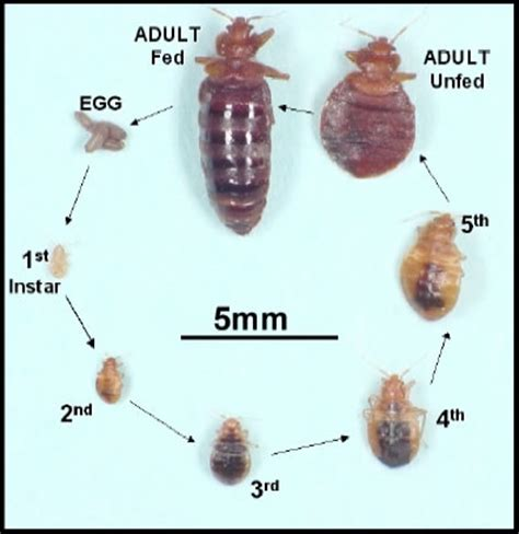 bed bug molt ridder pest control llc