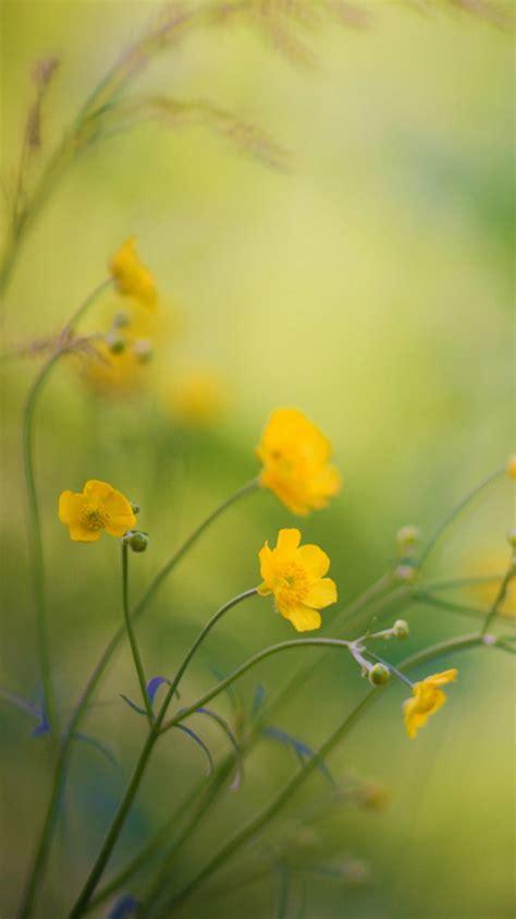 iphone 6 wallpaper yellow flower 60 beautiful nature wallpaper free to download