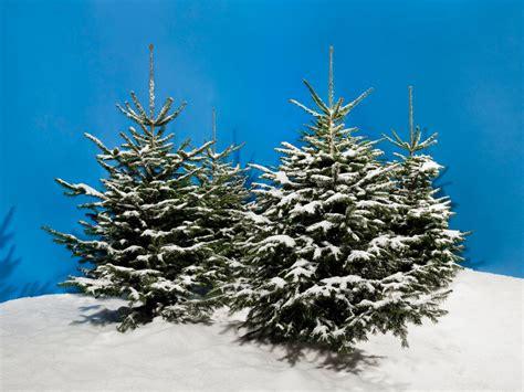 lichternetz f 252 r tannenbaum edel tannenbaum luxus iii
