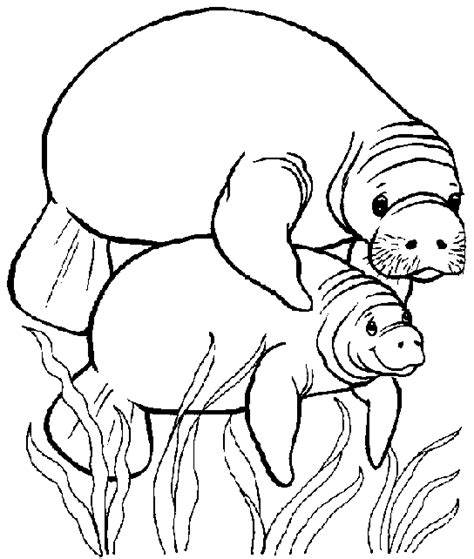 Manatee Coloring Pages water animals to color