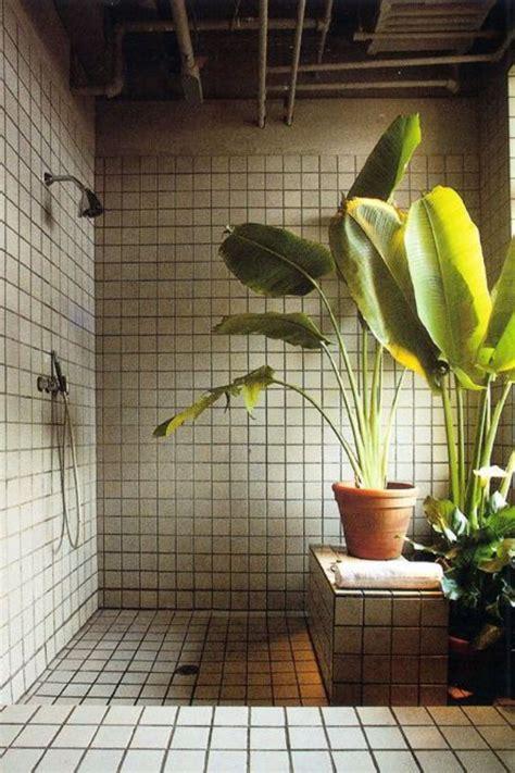 air plants bathroom shower plants create tropical spa experience well good