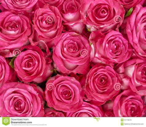 cing co dei fiori vada prezzi dei fiori prato in pieno dei fiori fotografia