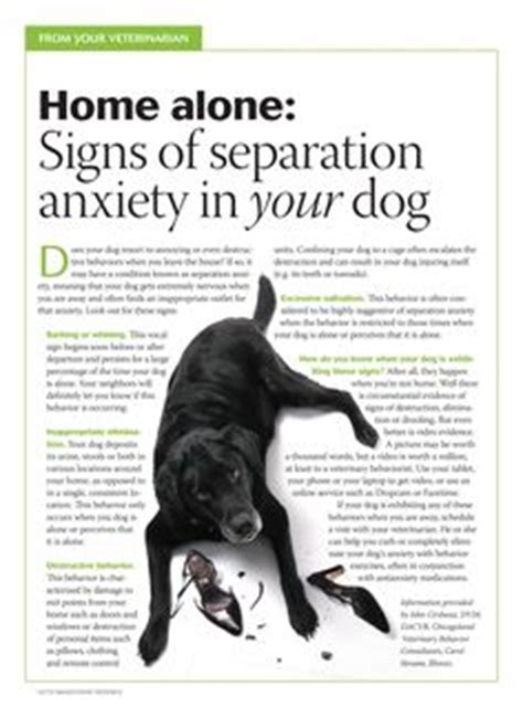 signs of anxiety in dogs 1000 images about scared on your anxiety and separation anxiety