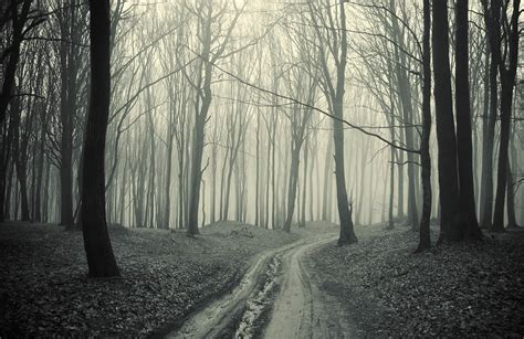 black  white forest pathway wall mural