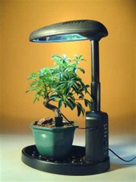 best grow light for bonsai bonsai tree plants desktop grow light