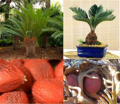 palm dogs sago palm toxic to dogs and style