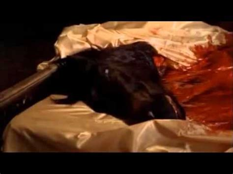 horse head in bed godfather horse head in the bed scene youtube