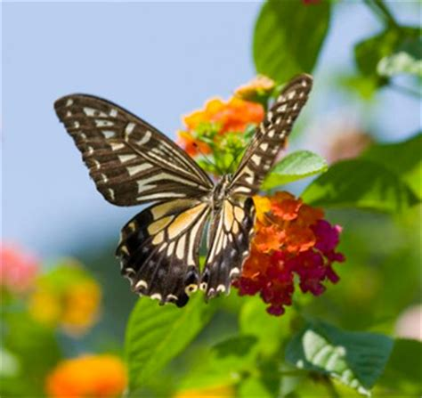 Gainesville Butterfly Garden by Gainesville Commercial Residential Landscaping