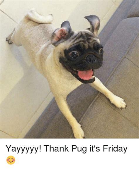 pug friday yayyyyy thank pug it s friday it s friday meme on sizzle