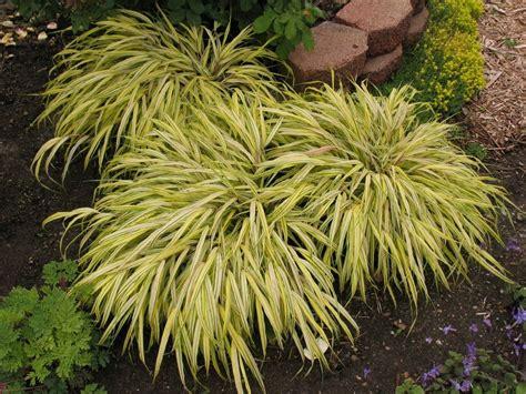 Arbre Exotique Exterieur by Plante Exotique Exterieur Plantes Grasses Et Cactus With