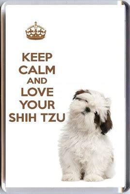 when will my shih tzu calm keep calm and your shih tzu with an image of a shih tzu fridge magnet