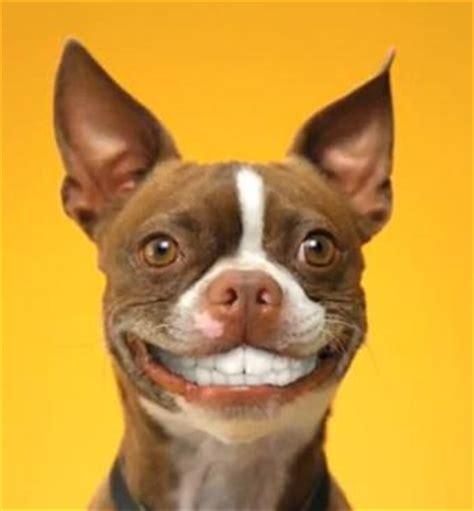 dogs with human teeth with human teeth quickmeme