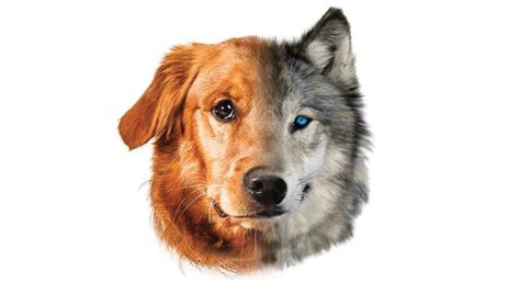 where did dogs originate where do our dogs come from dogs and pups magazine