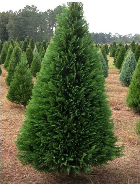 18 trees you should never plant in your yard