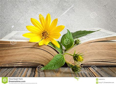 libro footpath flowers yellow flower on the opened old book stock photo image 59684978