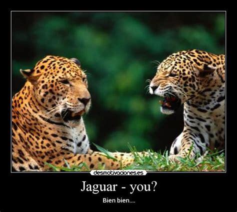 imagenes jaguar you im 225 genes y carteles de jaguar desmotivaciones