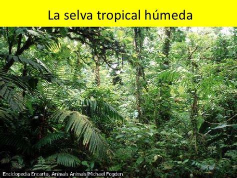 la selva tropical la selva tropical h 250 meda