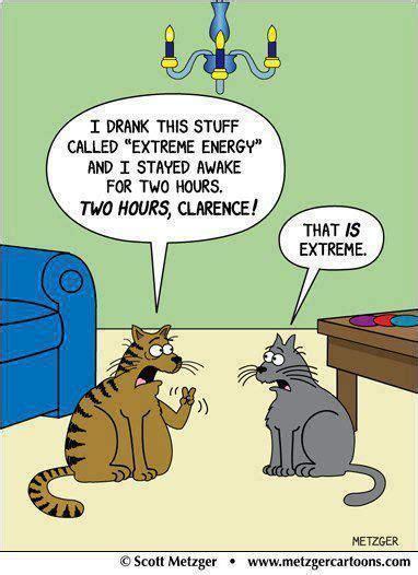 energy drink jokes cats