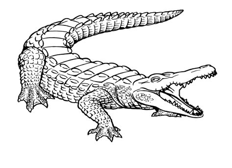 Crocodile Coloring Pages To Print Free Printable Crocodile Coloring Pages For Kids