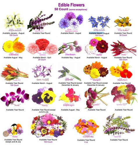 luxurious garnish edible flowers in food eat love savor edible flowers flores comestibles http www mayesh