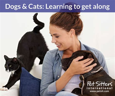 how to get cats and dogs to get along dogs and cats learning to get along