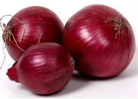 jual benih bawang merah 100 biji non retail bibit