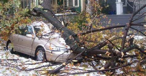 auto insurance when a tree what to do if a tree falls on your car quotewizard