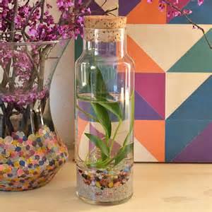 Easy water terrariums bottled water plants dream a
