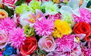 colorful flowers which type of flower are you flowers colorful flowers