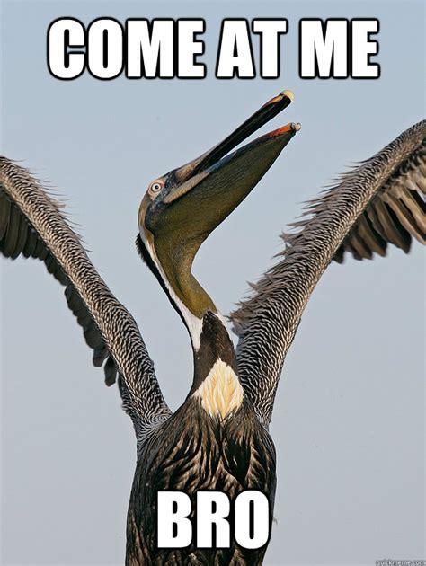 funny for funny pelican memes www funnyton com