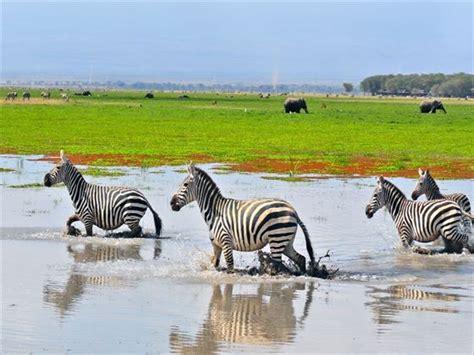 Boneka Grassland By Elie Gallery amboseli national park holidays tropical sky