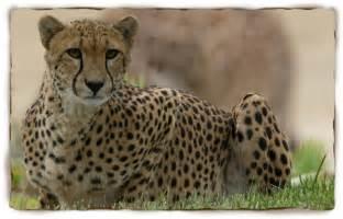 mammals characteristics list of mammals pictures of
