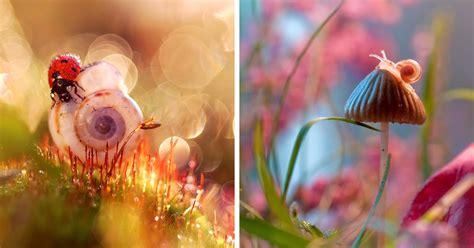 polish photographer shows natures beauty