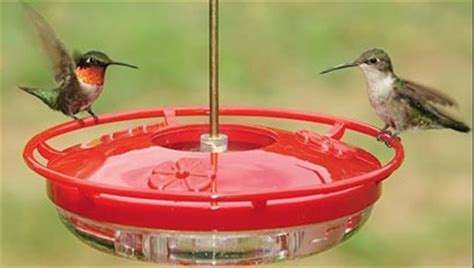 wild birds unlimited no hummingbirds at feeder